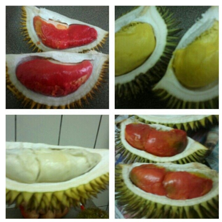 different types of durian | Food & Beverages | Pinterest ...