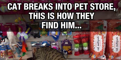 A stray cat got into a pet store and the employees found this when they got in the next morning.