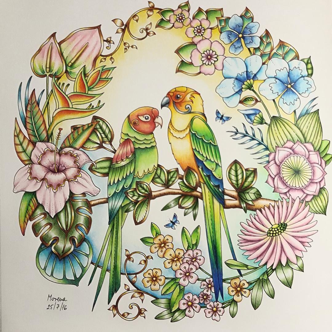 my parrots u0027 paradise from johanna basford u0027s gorgeous magical