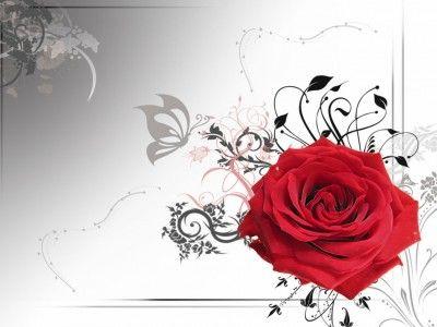 Red Rose Flower Border Red rose flower, Rose wallpaper