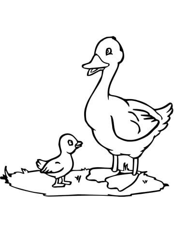 Mama Duck And Duckling Coloring Page Coloring Pages Bird