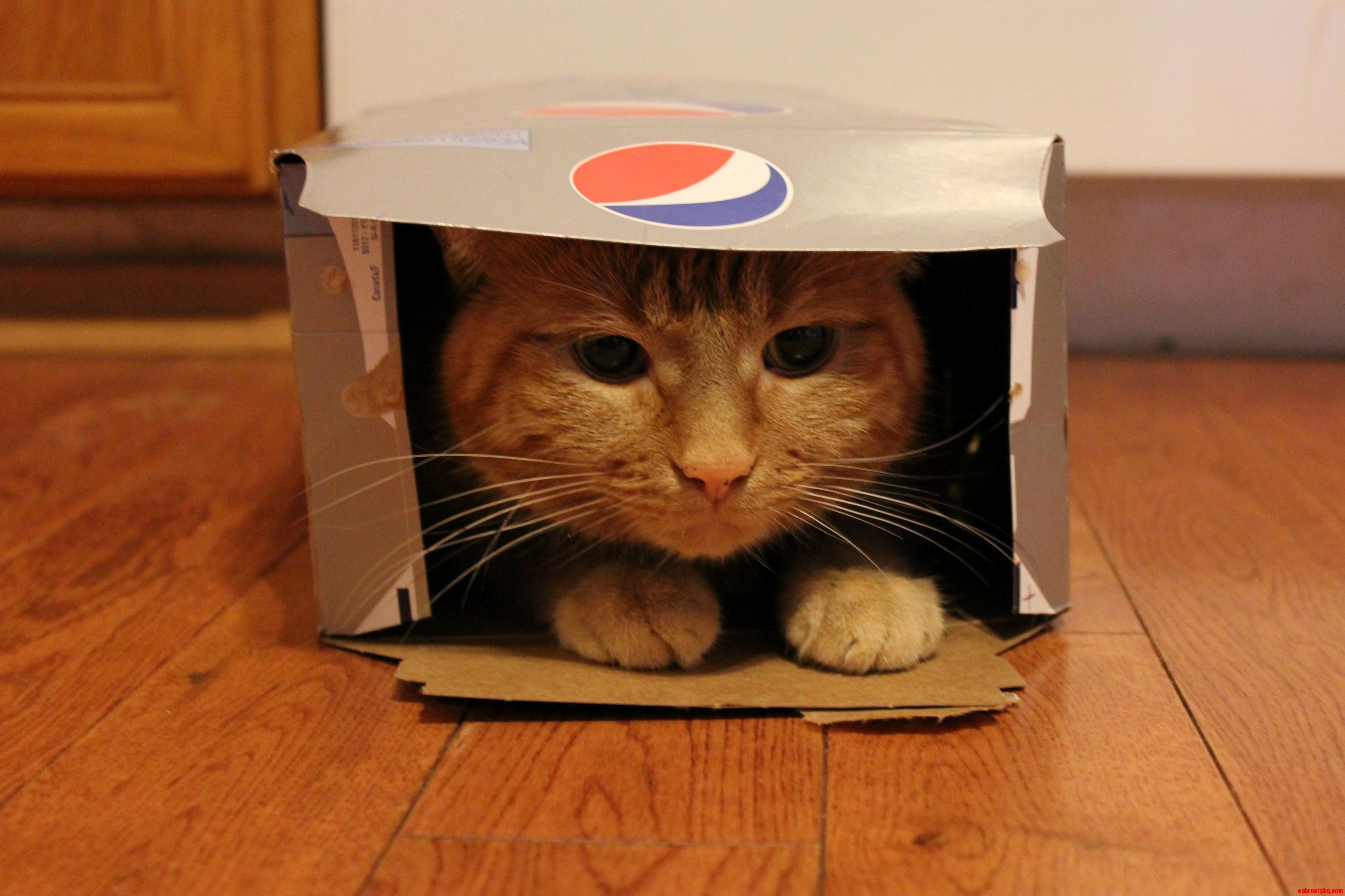Finally The Box Is Mine… All Mine. - http://cutecatshq.com/cats/finally-the-box-is-mine-all-mine/