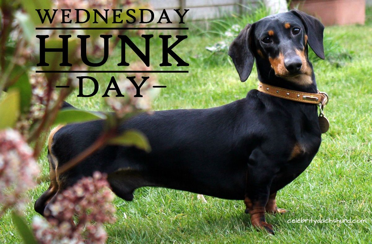 Today S Wednesday Hunk Is Scooby From Dorset U K Animals