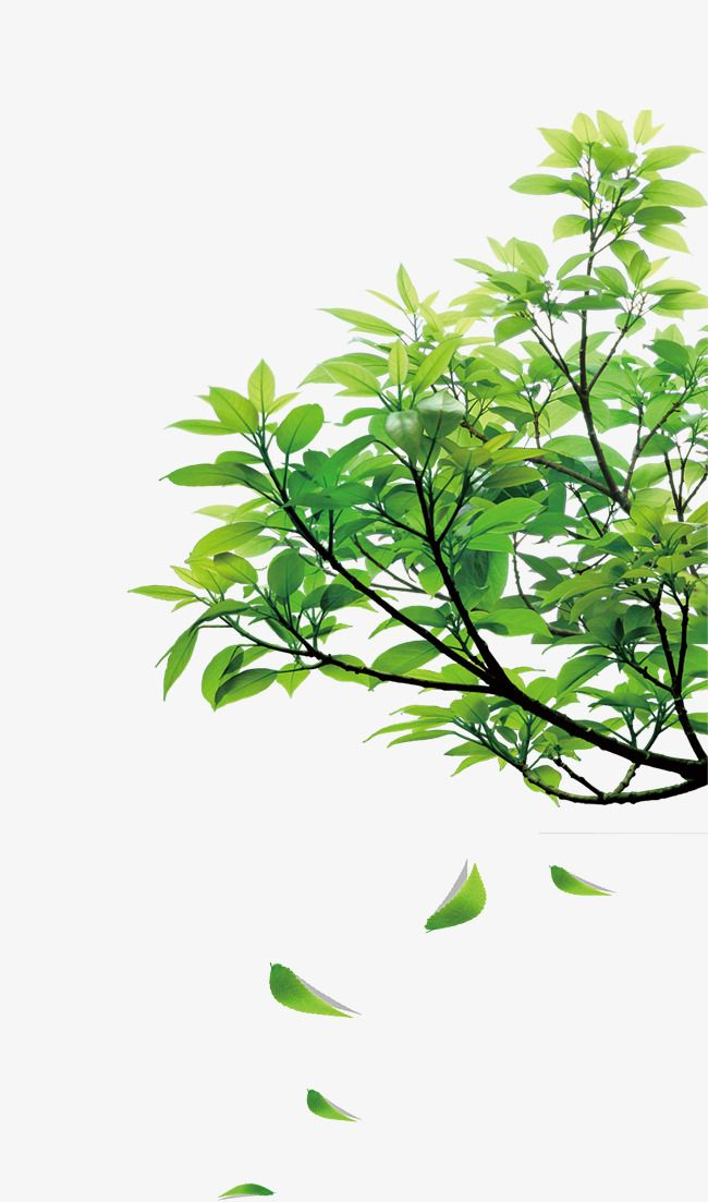 Natural Green Leaves Photoshop Landscape Watercolor Leaves Photoshop Pics