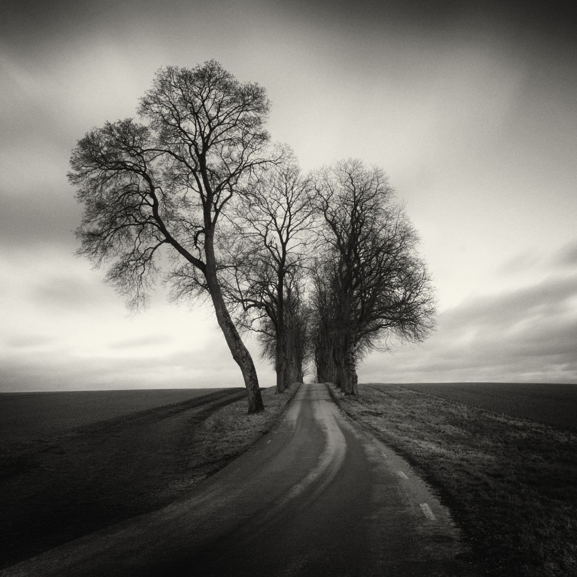 Black and white analog photographs explore the serenity of long meandering roads colossal