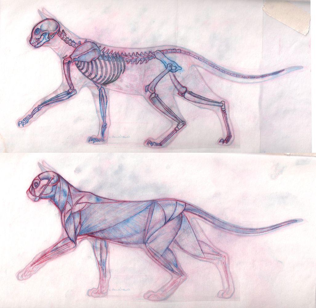 Cat Anatomy 01 by Raven-Scribbles.deviantart.com on @deviantART ...