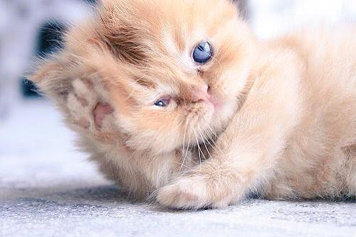 @PlusParagon @PlusParagon2  #3KCOC   We're cat lovers      ٩(๑•̀ω•́๑)۶