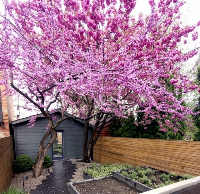 28 Tips For A Small Garden: The 10 Best Trees For Small Gardens