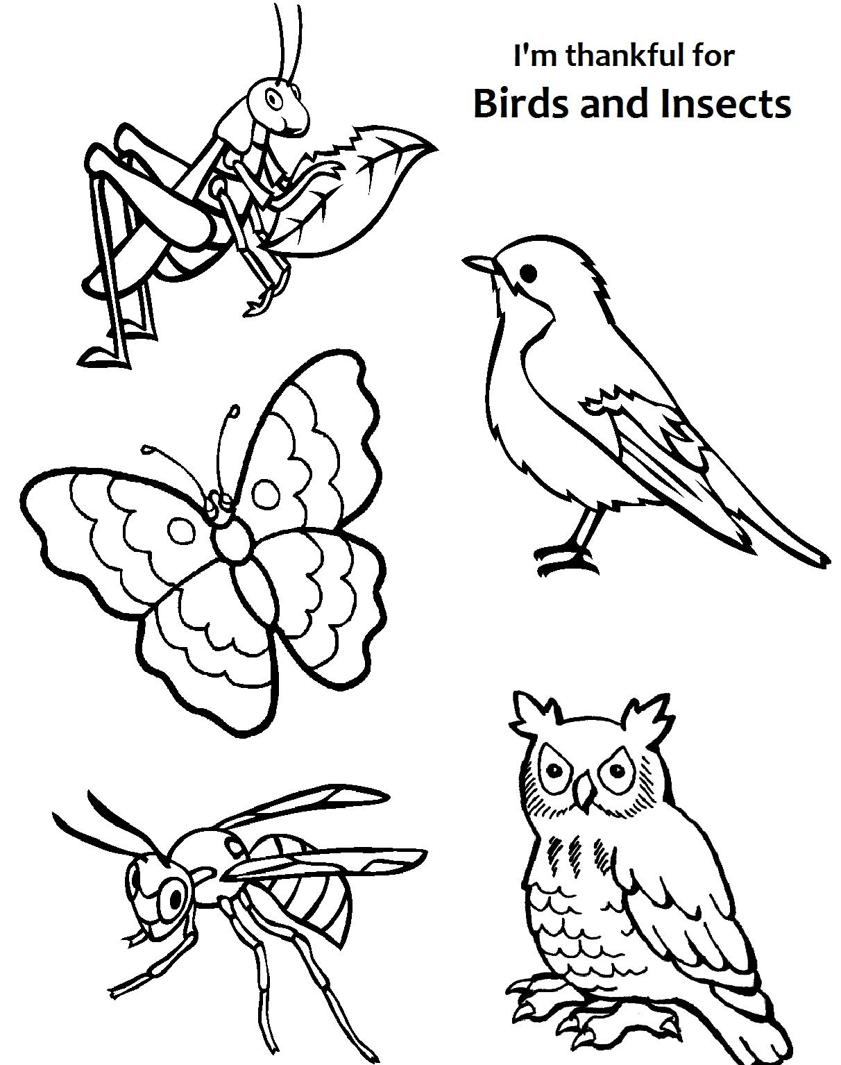 I Am Thankful For Birds And Insects Coloring Page.