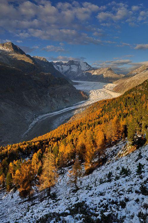 Aletschwald vor dem Gletscher kurz vor Sonnenuntergang, Valais