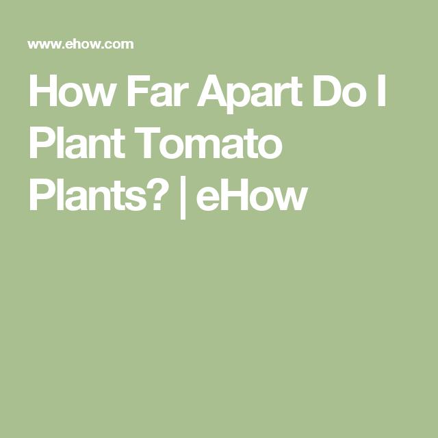 How Far Apart Do I Plant Tomato Plants?