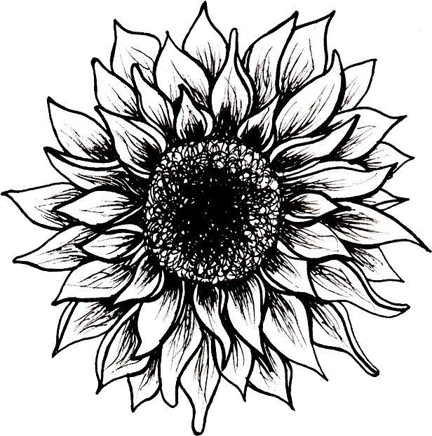 Photo of 'Black and White Sunflower' Sticker by juliahealyy
