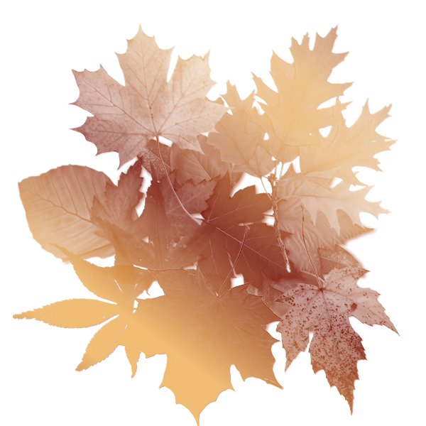 Autumn Leaves Background 600x600