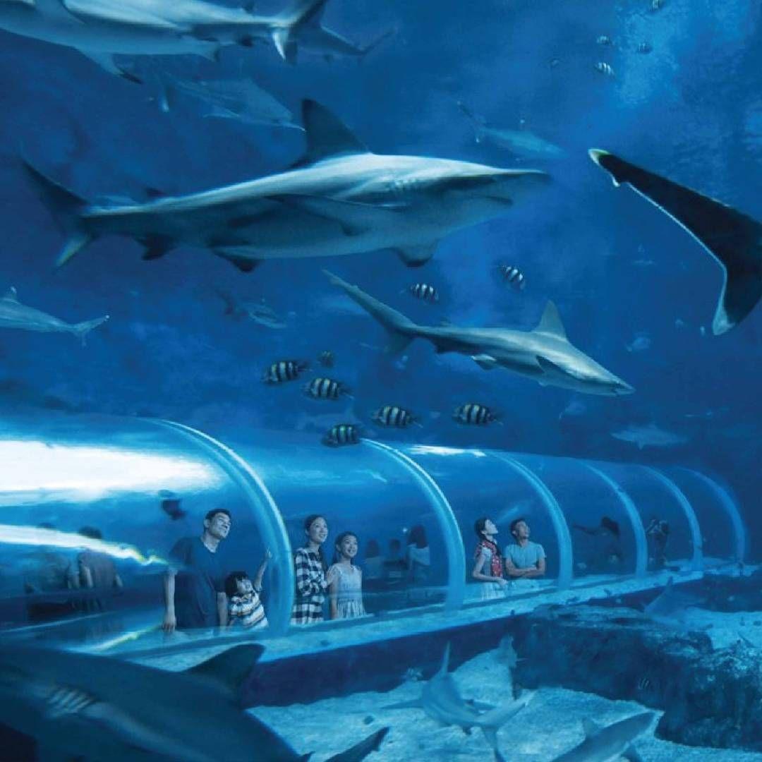 tiket atraksi sea aquarium singapore mulai dari rp 285000 untuk