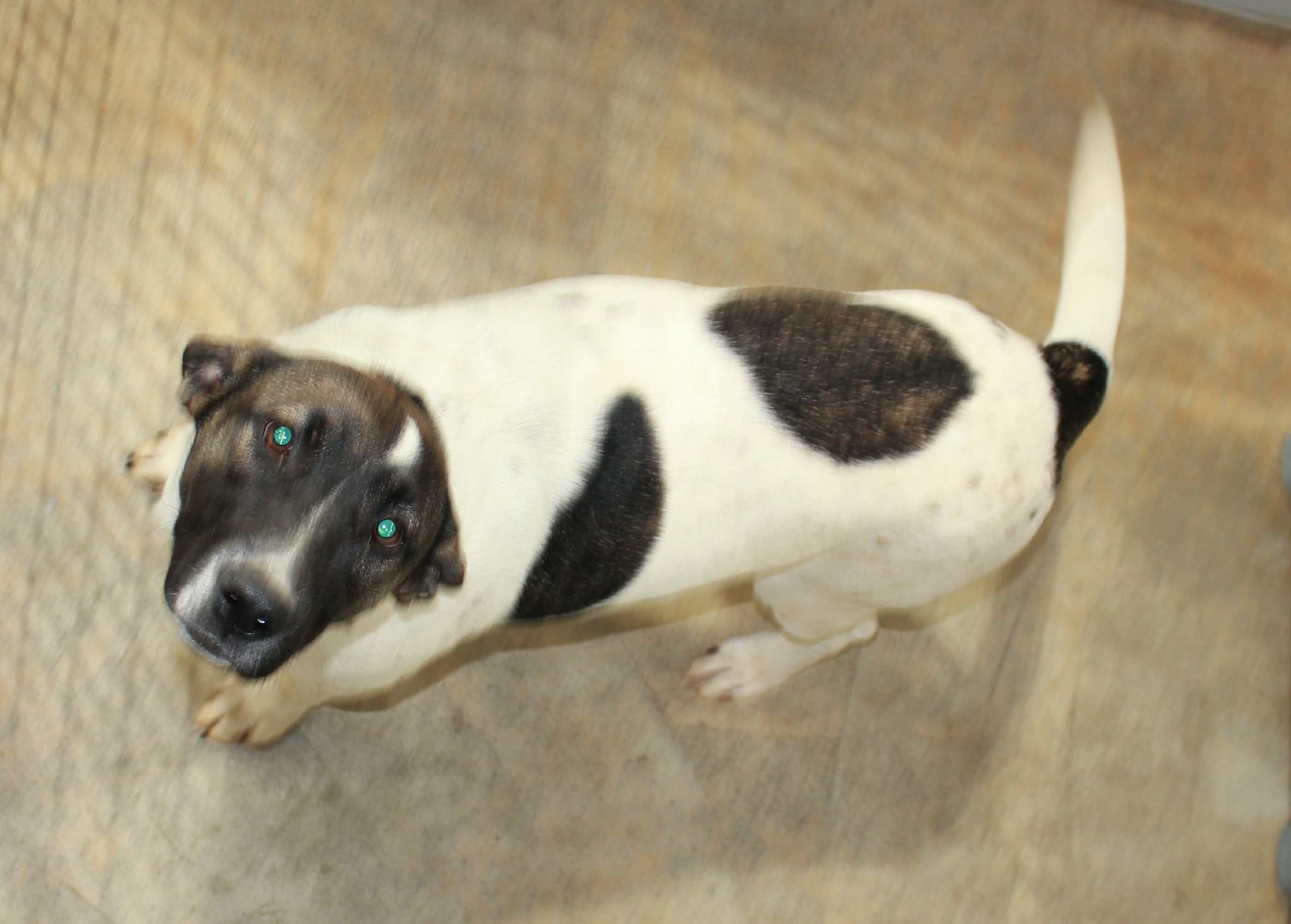 Go to Facebook page:  Mobile and Baldwin County - Urgent Dogs, enter dogs name:  Sabra.