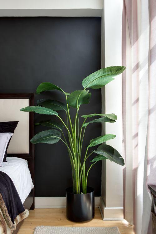 Paradiesvögel sind riesiger grüner tropischer Knall für Ihr Geld #apartmentgardening