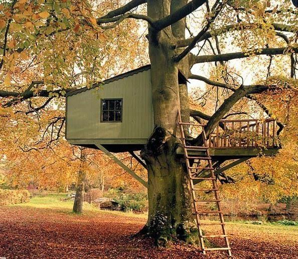 Dude, Sustainable!: How to Build Your Own Backyard Treehouse that's Safe Enough for Your Kids