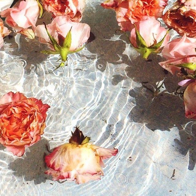 Pin By Megan Breukelman Photographer On Inspiration Florals
