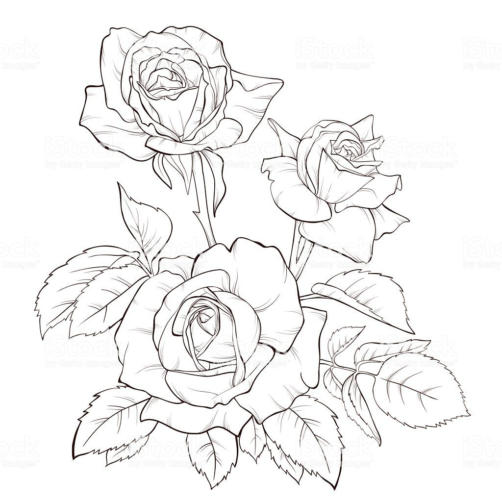 Rose Bouquet Vintage Card Roses Drawing Flower Drawing Floral Illustrations