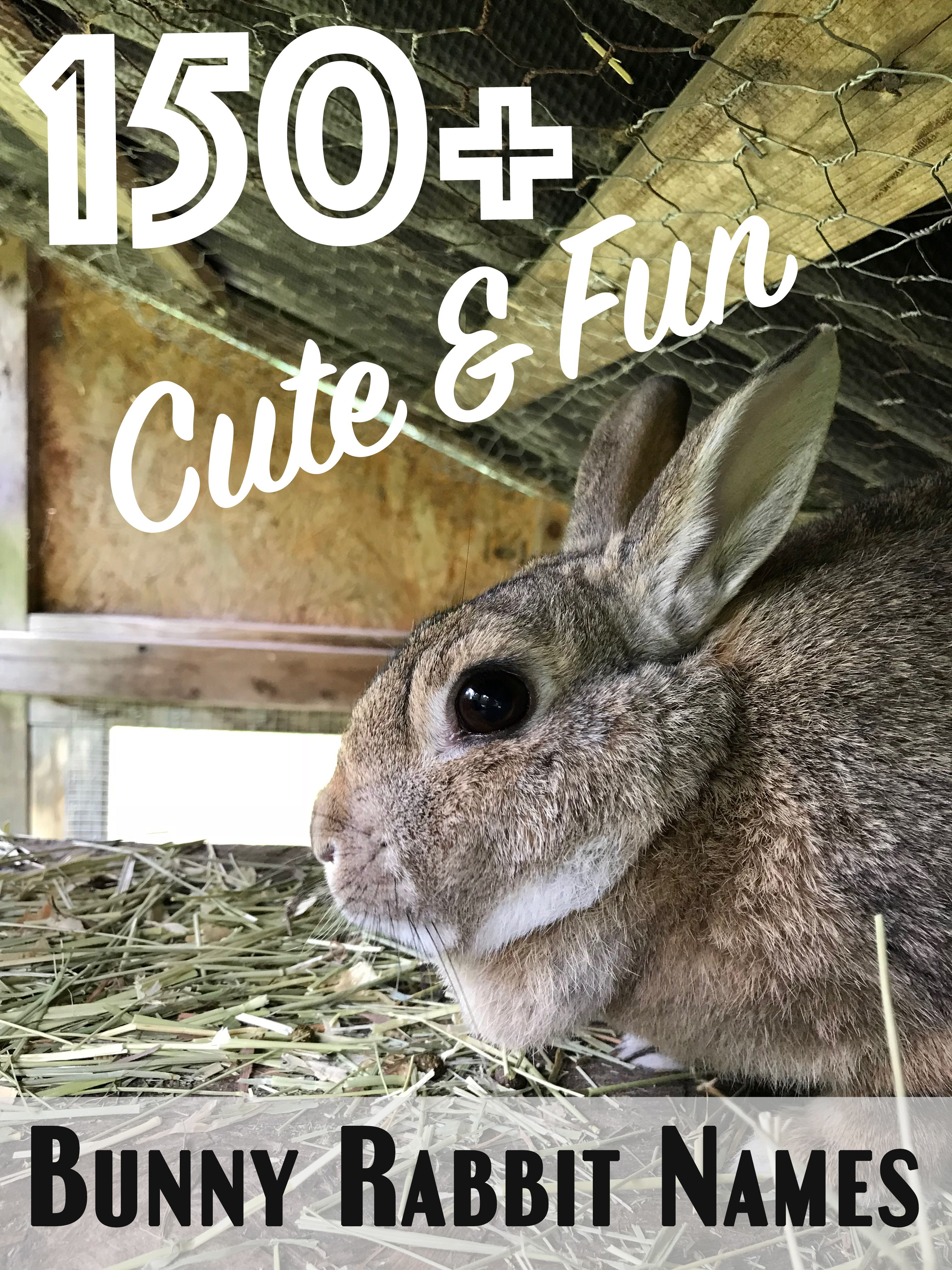 150 Cute And Funny Bunny Rabbit Names Rabbit Names Female Rabbit Names Cute Pet Names