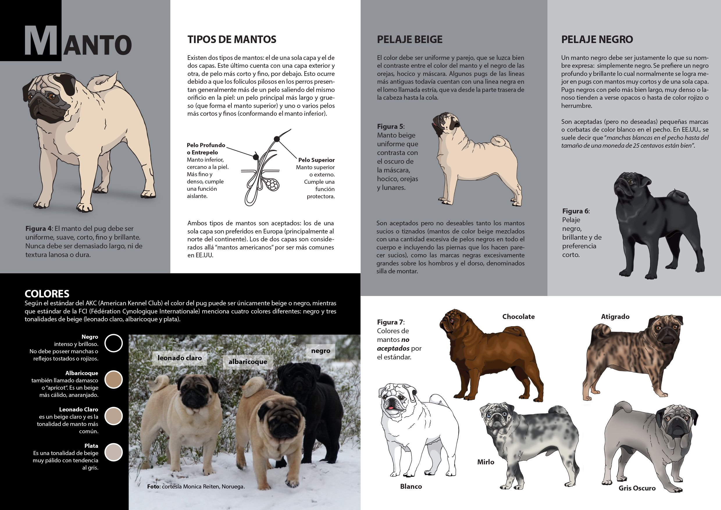 Estandar Ilustrado De La Raza Pug Pug Illustrated Standard El