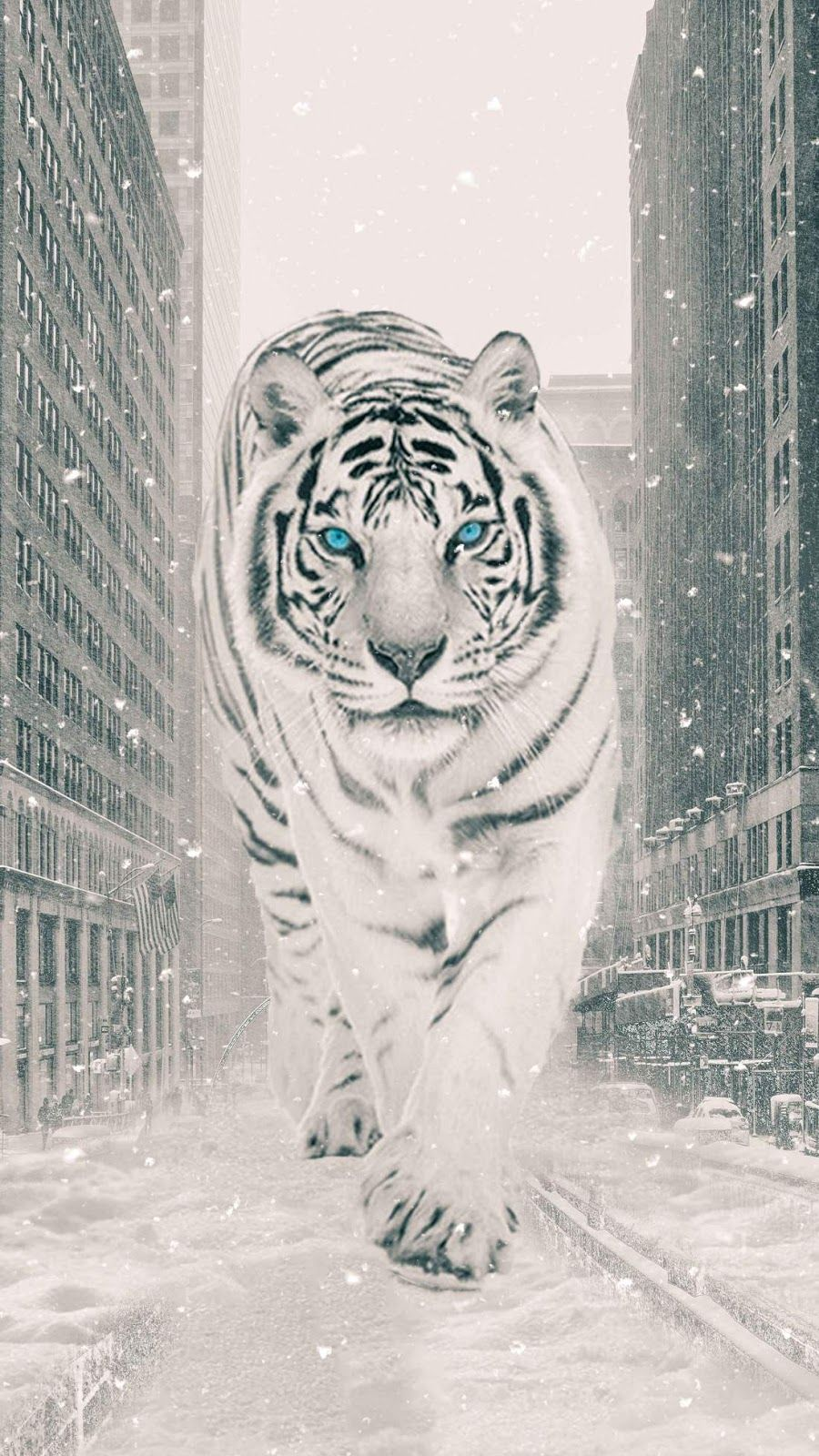 White Tiger Urban Tiger Wallpaper Tiger Wallpaper Iphone White