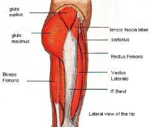 Lateral Thigh Muscles Diagram Online Schematic Diagram