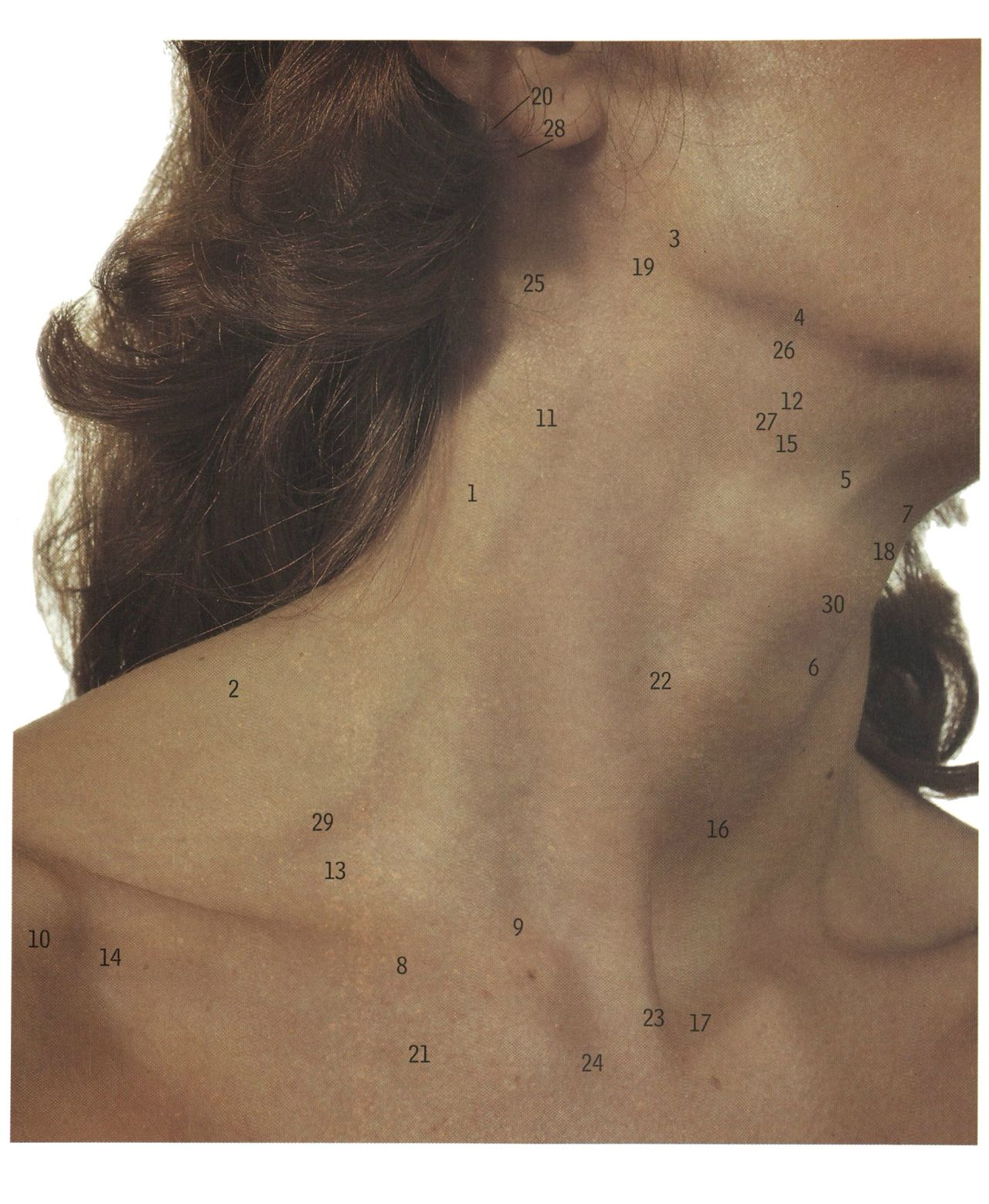 autosafari: The exposed neck: from the accessory nerve (emerging) to ...