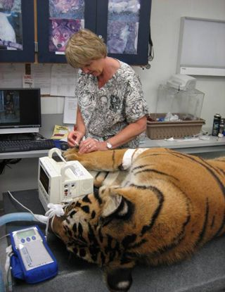Zoological Internship With Images Veterinarian Small Animal
