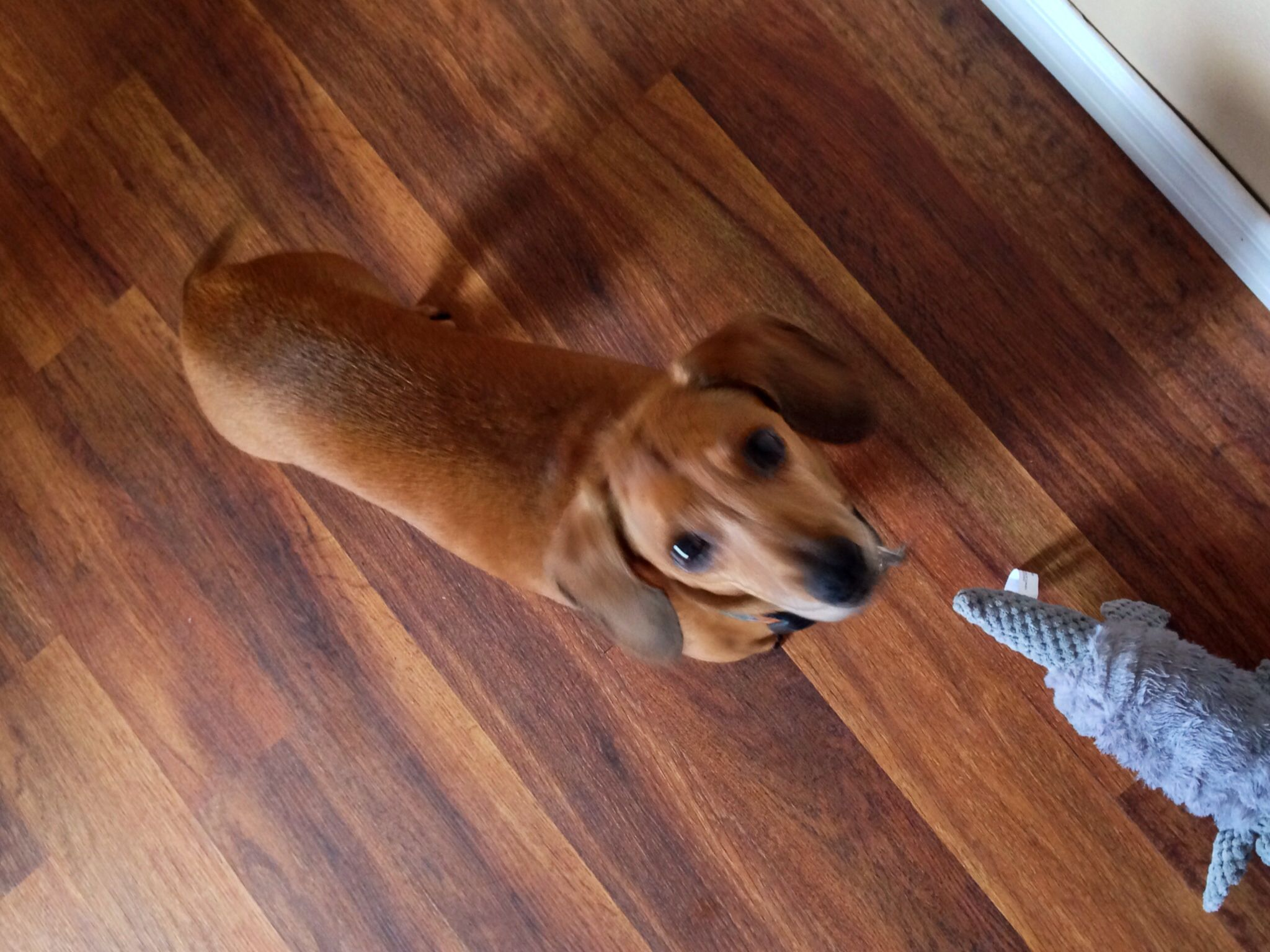 Louie loves his new armadillo toy 'Army'!