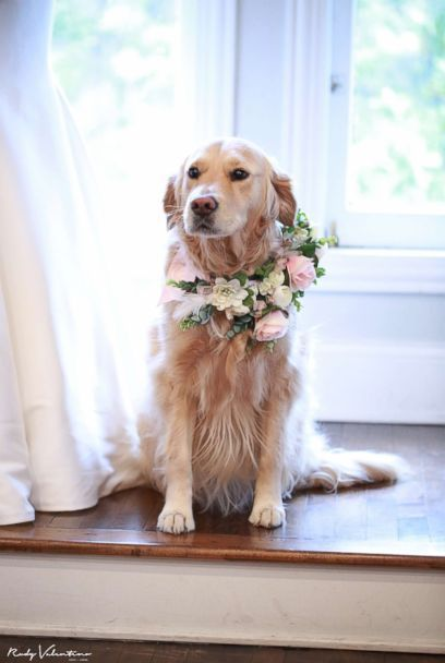 Bride Includes Her Dog As Flower Girl In The Wedding She S My