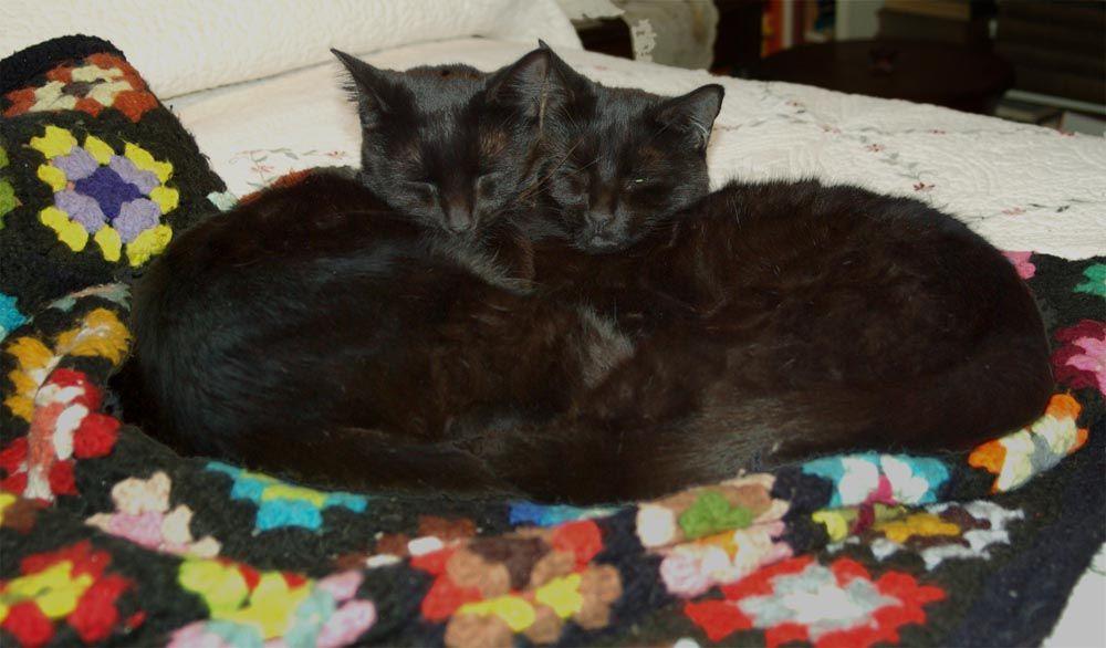 heartcats-heartshapedcats1.jpg (1000×586)
