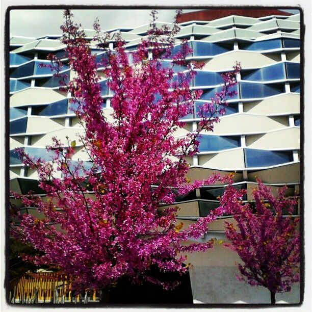 En flor... #igerszgz #primavera12