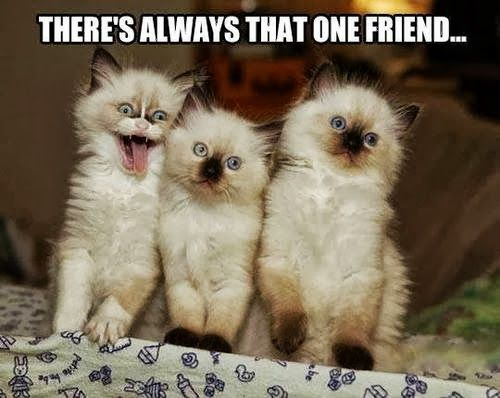 There's always that ONE friend...  and bonus! Birman kittehs.