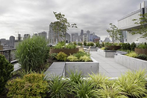 Nathan Phillips Square Podium Roof Garden By Plant Landscape Architecture Works Roof Garden Green Roof Garden Roof Garden Plants