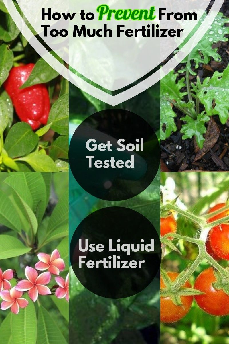 How To Prevent From Too Much Fertilizer Natural