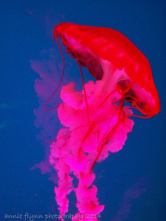 Neon Jellyfish in motion by annieflynn1 on Etsy, $30 00