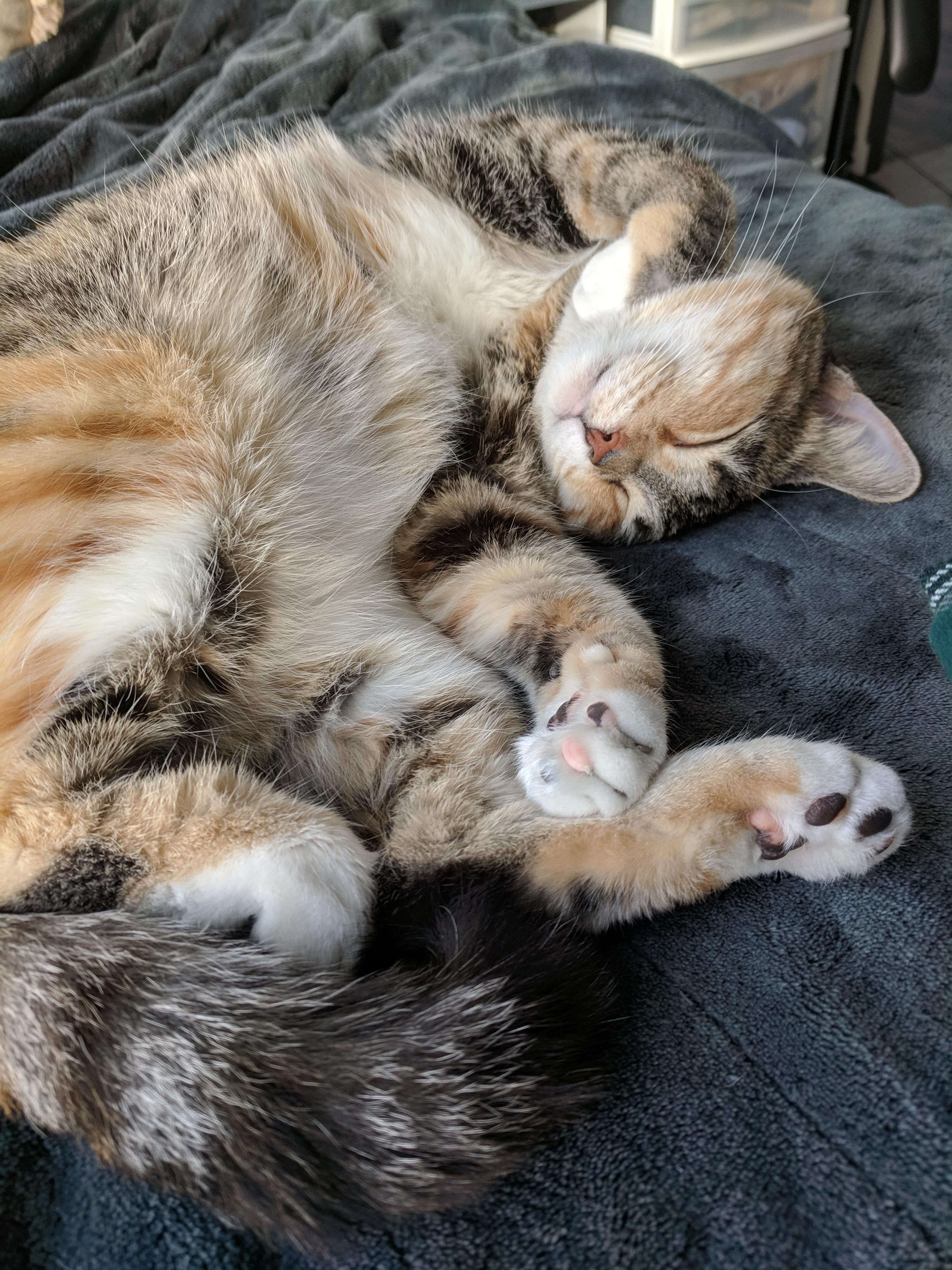 Kitty sleeps soundly during polar vortex Cats, Kitty, Sleep