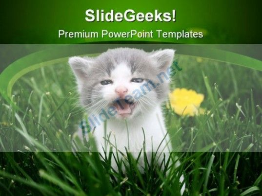 Baby cat animals powerpoint templates and powerpoint backgrounds baby cat animals powerpoint templates and powerpoint backgrounds 0211 powerpoint templates themes toneelgroepblik Images