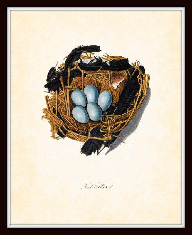 Antique German Birds Nest Series  Plate 1 1767