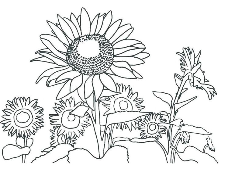 Sunflower Coloring Pages Pdf Coloring Pages For Kids Sunflower