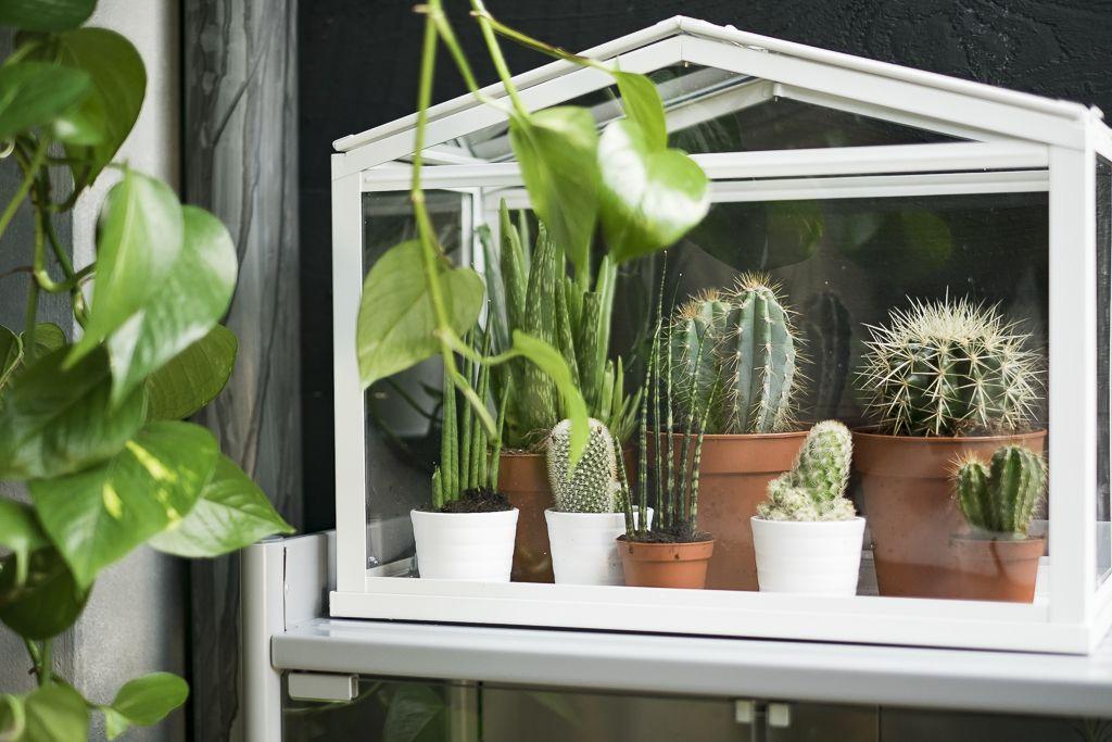 socker kweekkas binnen buiten wit serre jardin. Black Bedroom Furniture Sets. Home Design Ideas