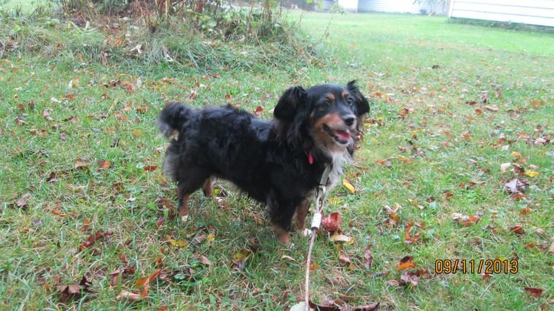 Adopt LadyAdopted 101213 on Animal rescue, Animals