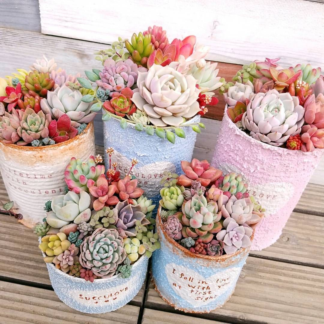23 Types of Succulents & How to Care It for Beginners -   14 planting Room succulents ideas
