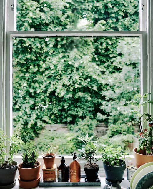 4 id es pour d corer son int rieur avec des plantes les. Black Bedroom Furniture Sets. Home Design Ideas
