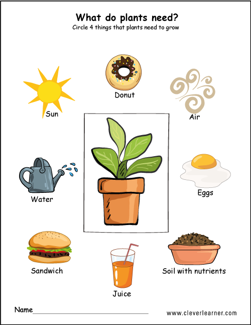Needs of plants worksheets for preschool #preschool #worksheets ...