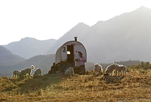 Chuck S Journal Great Pyrenees Dog Basque Country Shepherds Hut