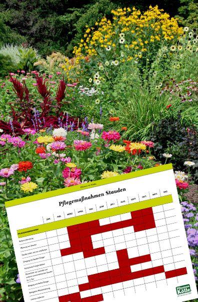 Pflanzen Kolle Pflegekalender Fur Stauden Mit Unserem