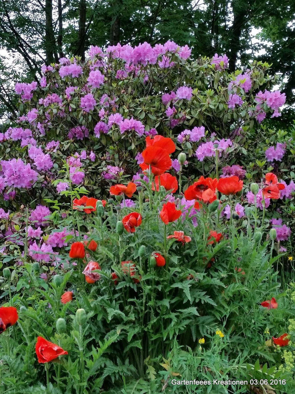 Garten 03.06.2016