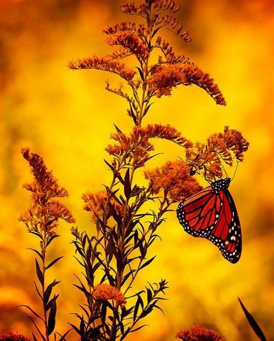 Butterfly #orange